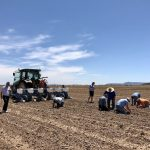 Verified Organic and ConsenSys-backed Treum launch Ethereum blockchain solution to track and trace the first commercial hemp crop planted in Arizona